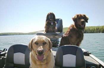 dogs on Bay de Noc